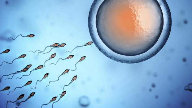 Image result for Sperm Counts Plummet In Western Men, Study Finds