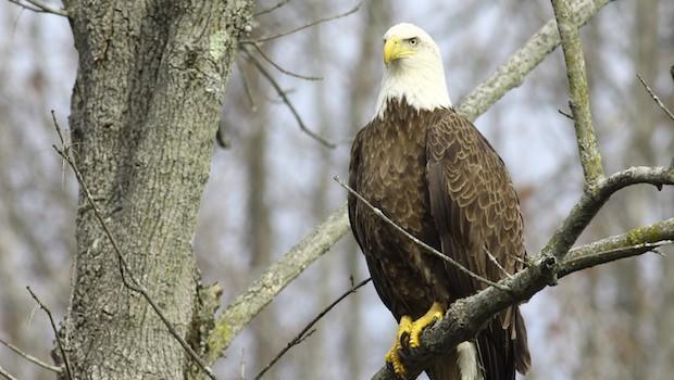 Staten Island Eagle Nest