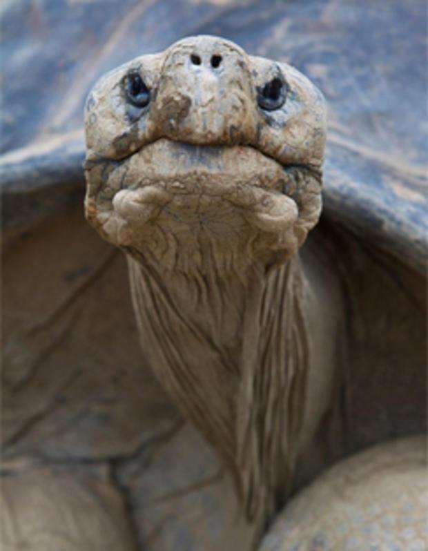 速度最乌龟山 - 圣地亚哥动物园-244.jpg