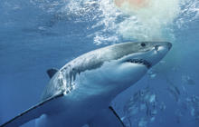 Shark safety tips: How to stay safe in the water