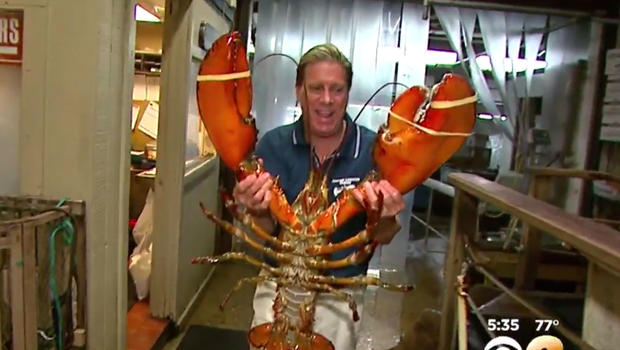 95-year-old lobster featured at Long Island, New York restaurant - CBS News