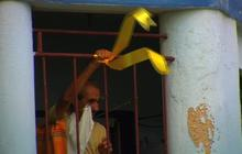 Big display of yellow ribbons for the Cuban Five