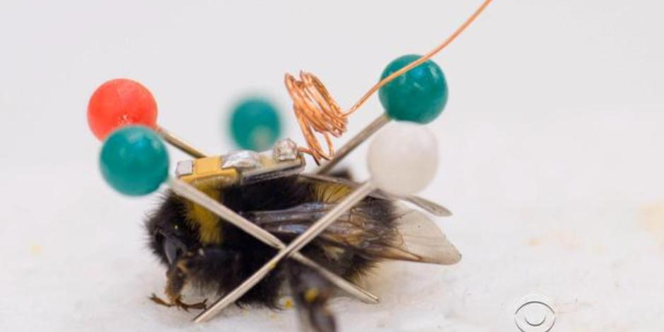 Bees wearing tiny backpacks deployed to solve mystery