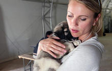Puppy rescue in Afghanistan by U.S. troops