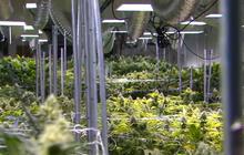 Ohio voters reject legal marijuana