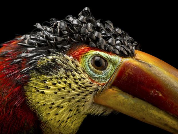 Joel Sartore's Photo Ark