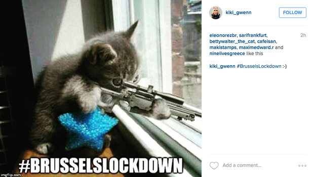 These cats are fighting terrorism