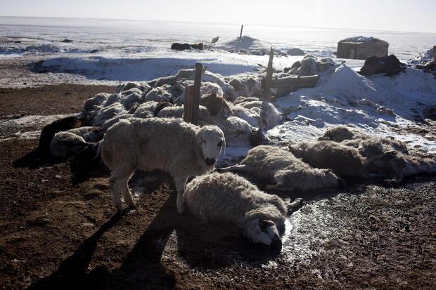Mysterious mass animal deaths