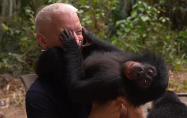 The playful world of baby bonobos