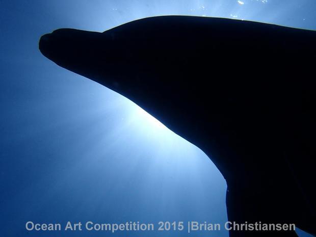 2015 Ocean Art Underwater Photo Competition winners
