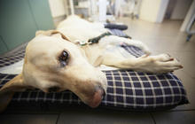 Dog flu outbreak: How to protect your pet