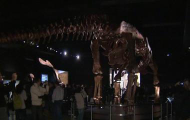 Titanosaur debuts at American Museum of Natural History