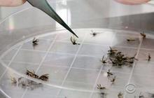 Pregnant women warned about Zika virus outbreak