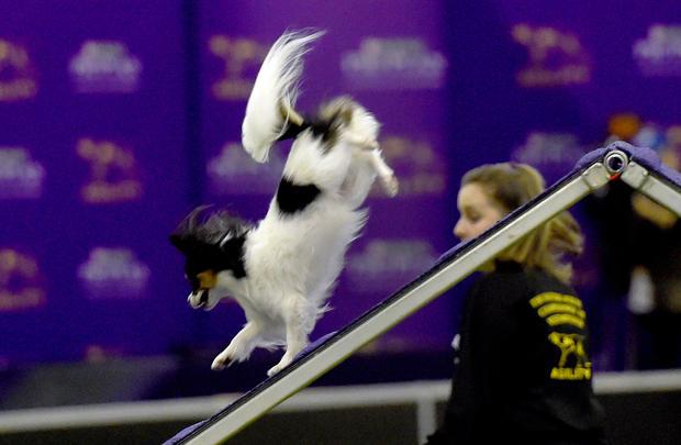 dog-show-2.jpg