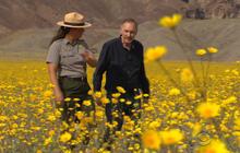 death-valley-flowers-2.jpg