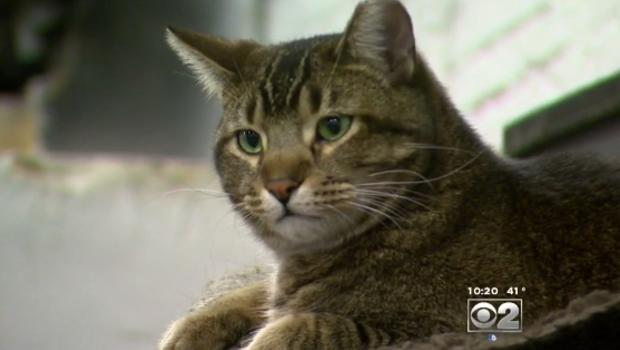 chicago deploys feral cats to keep rats away   cbs news
