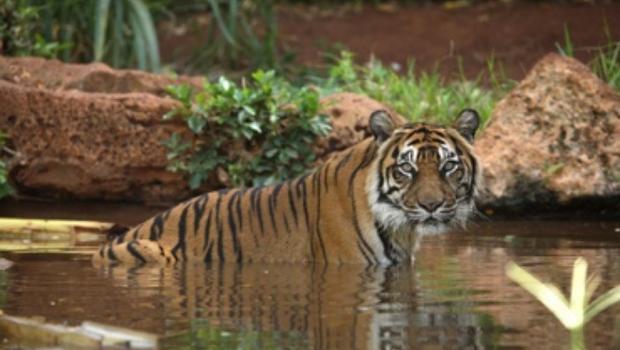 Tiger kills keeper at Florida zoo