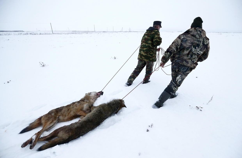 рыбалка в чернобыле 2016