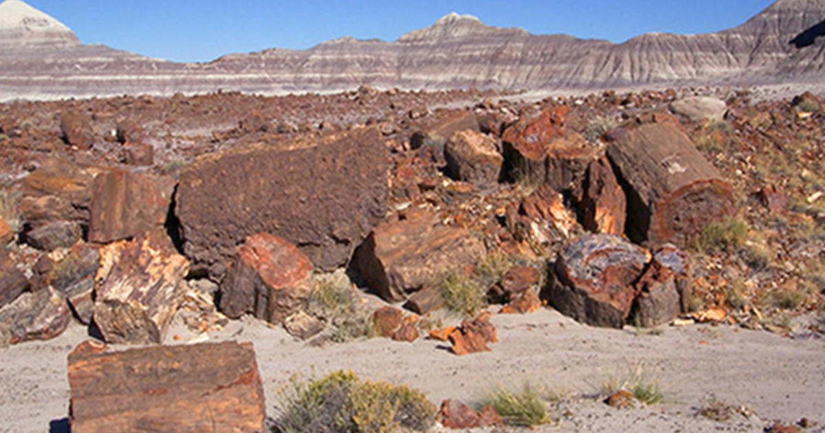 petrified forest natl pk single lesbian women Why women are important to view more advice from a petrified forest- petrified forest national park single - $ 275 usd petrified forest national park.