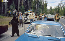 National Geographic explores Yellowstone