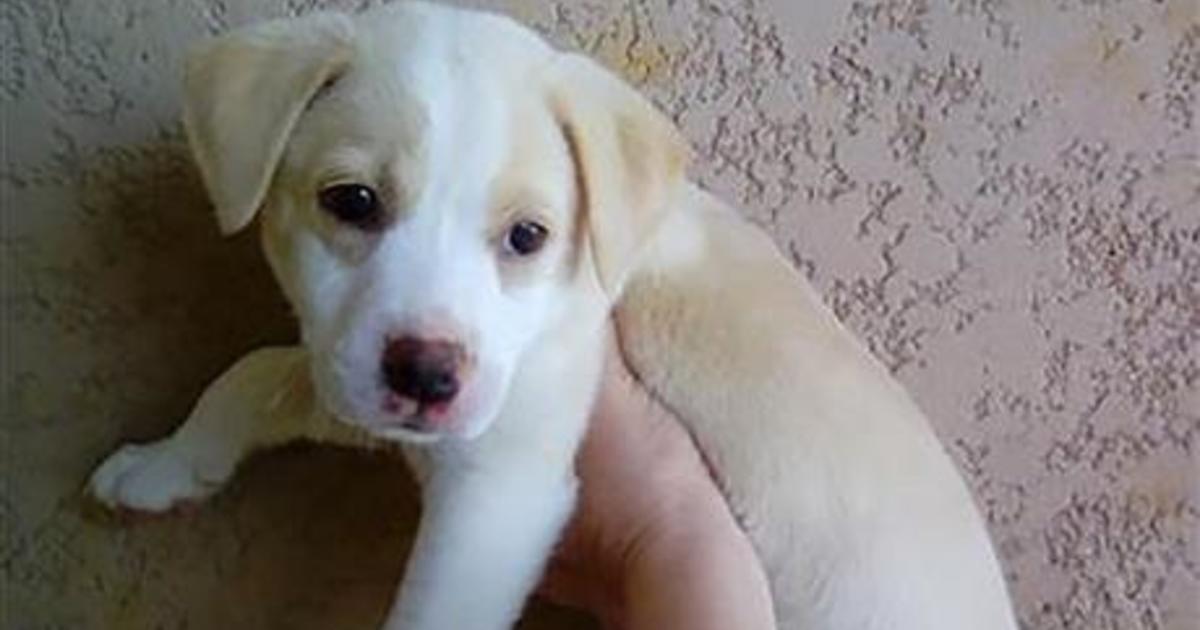 Kauai Humane Society Dogs