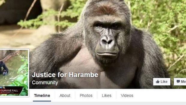apes don't deserve human justice