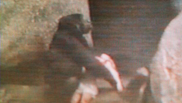 gorillachildap9608170826.jpg