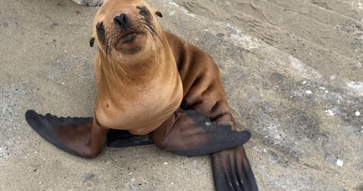 San Francisco police officers help rescue baby sea lion ...