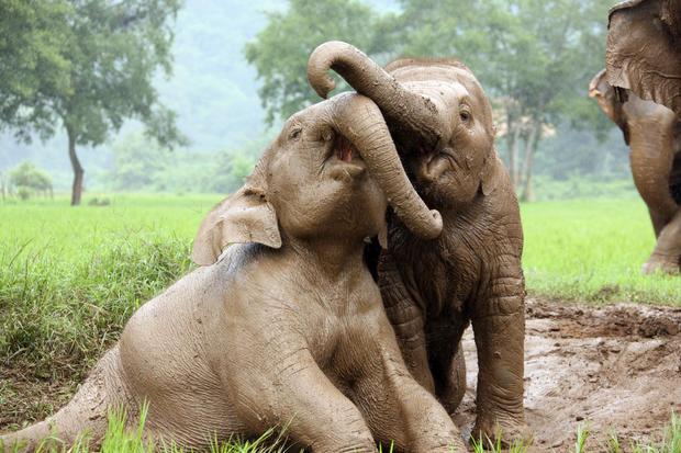 Thailand's elephant whisperer rescues the injured