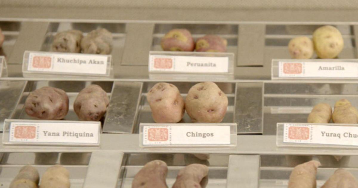 Can potatoes really grow on Mars?