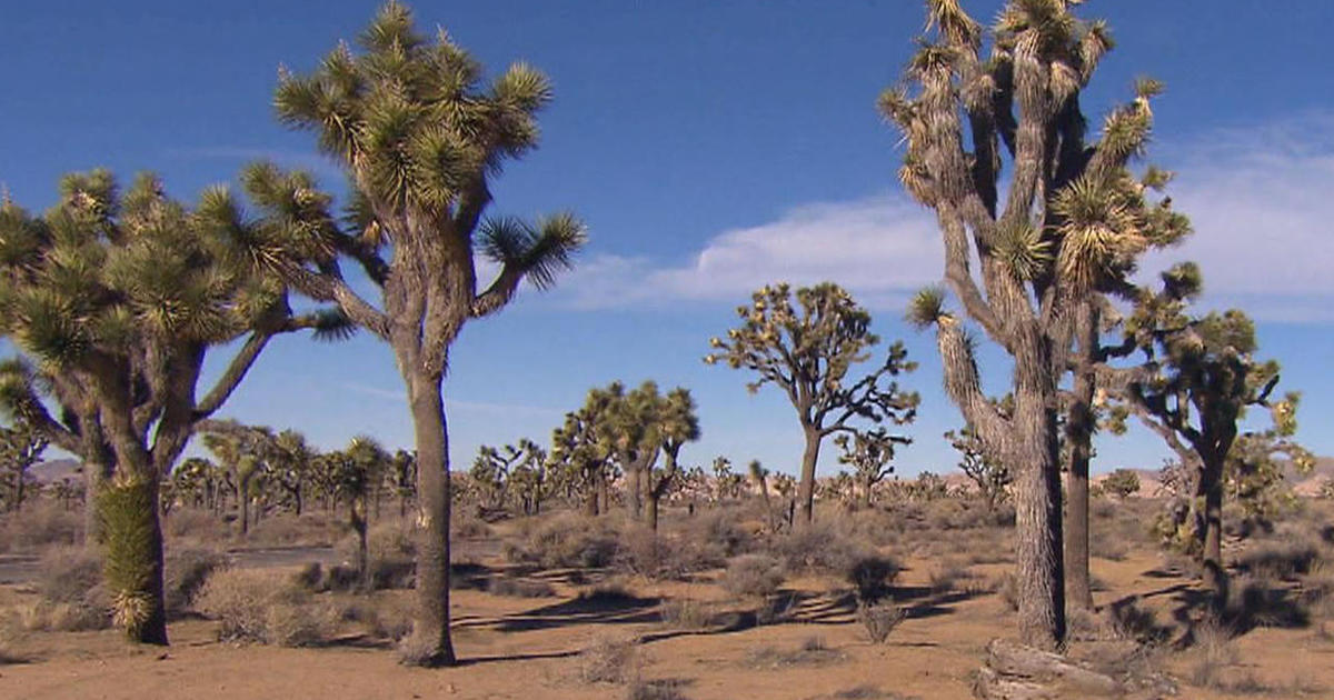 joshua tree national park girls Easy hikes arresting desert landscapes get helpful tips on how to plan and what to see and do on a visit to joshua tree national park with kids.