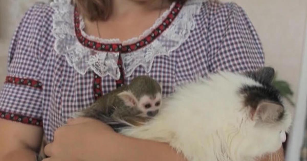 Cat adopts 3-week-old monkey