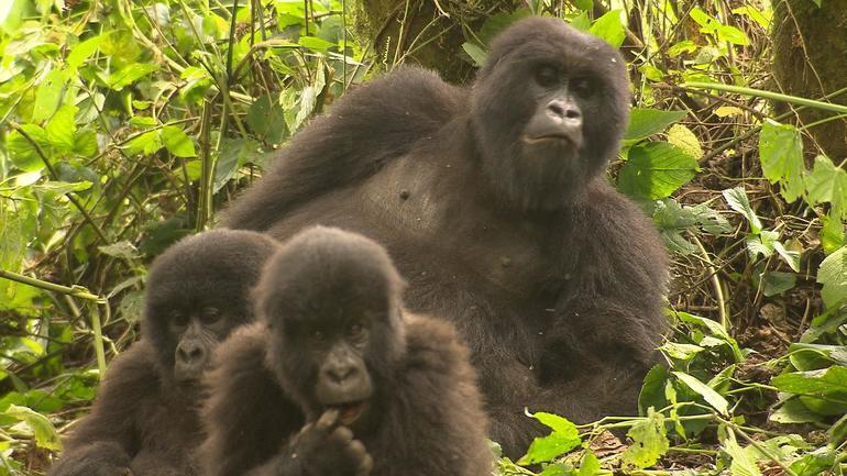 gorilla-family.jpg