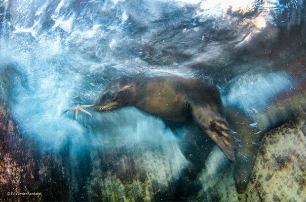 Top wildlife shots 2016