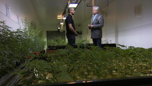 marijuana-farm-620.jpg