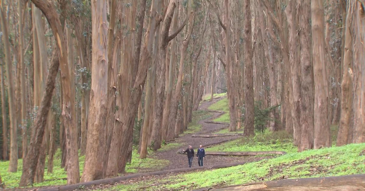 Presidio Park In San Francisco A Beautiful Enclave With A