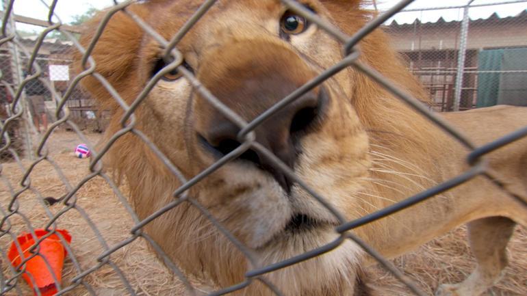 lionlifesavers-8.jpg
