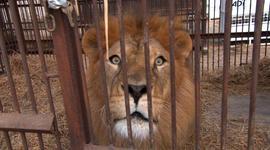 Lions interrupt 60 Minutes interview