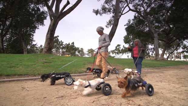 Paralyzed rescue dogs get wheels