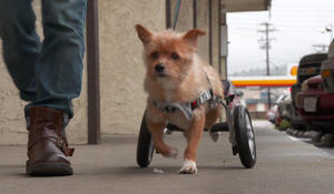LA shelter gives disabled dogs a second chance with a set of wheels