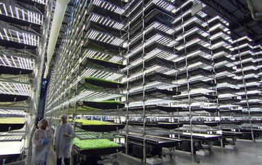 How Aerofarms' vertical farms grow produce