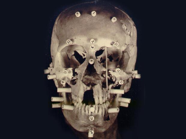 安妮塔汉头骨重建