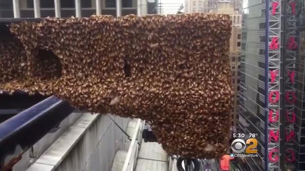 170629-cbs-new-york-bee-swarm-01.jpg