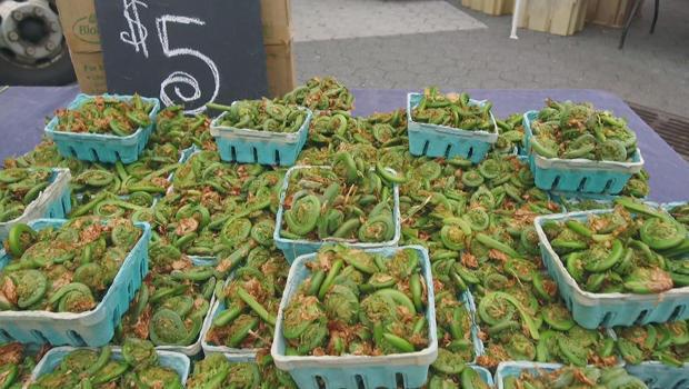 蕨菜,蕨类在工会平方米的绿色市场-620.jpg