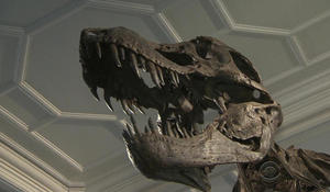 New study suggests Tyrannosaurus rex could barely run