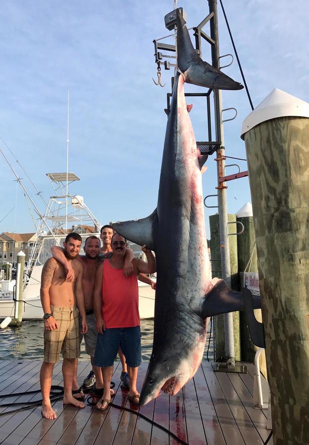 从左边开始,Mark Miccio,Matt Miccio和Steve Miccio将于2017年7月22日在新泽西州Brielle的Hoffmann Marina拍摄一张926磅重的Mako鲨鱼照片,照片由Jenny Lee Sportfishing提供。