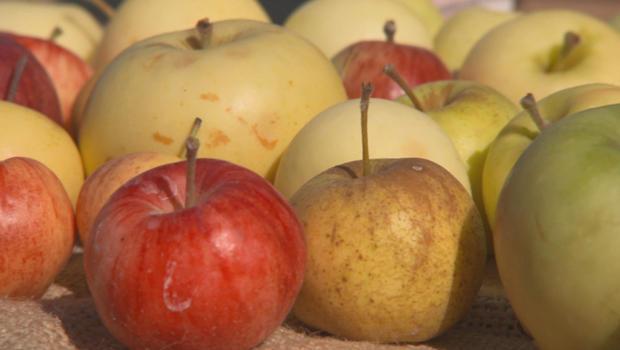 apples-b-620.jpg