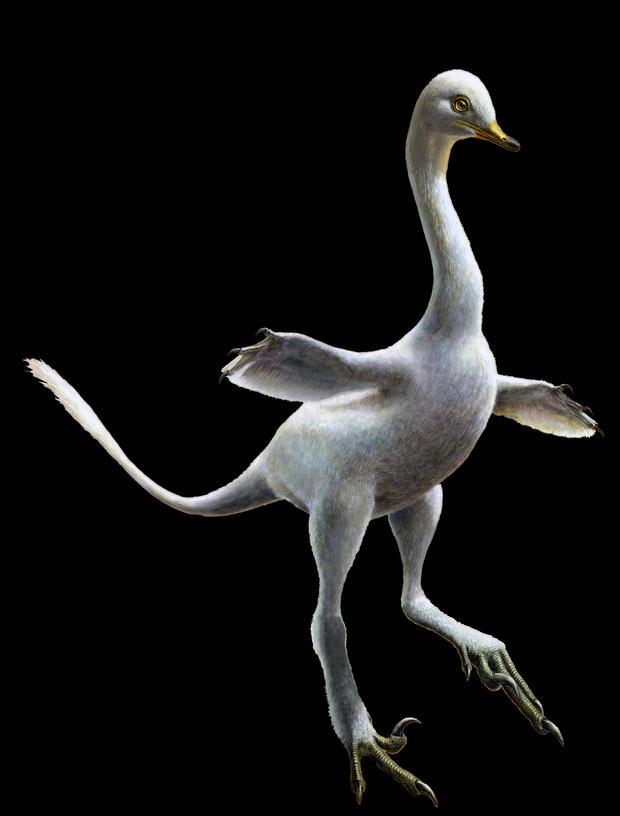 halszkaraptor  - 卢卡斯,panzarin.jpg