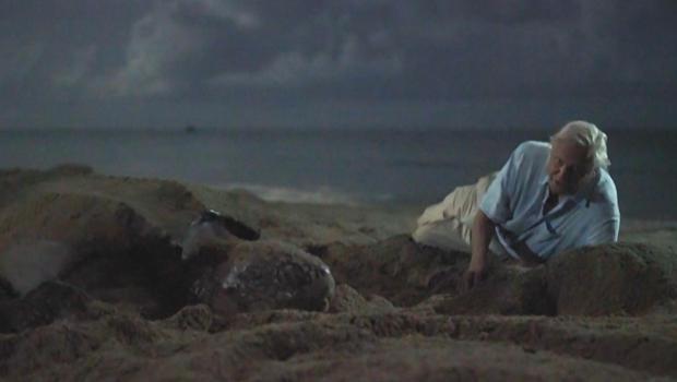 蓝色行星先生,大卫 - 艾登堡与 - 龟620.jpg