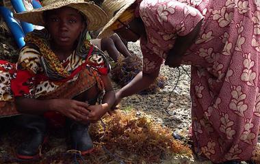 Women seaweed farmers in Zanzibar